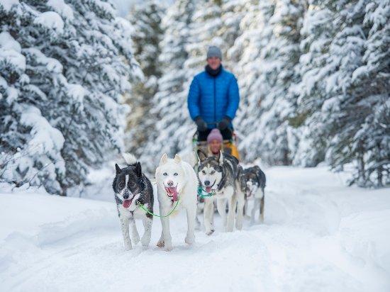 Yukon, Canada: Dog sledding is a truly Northern experience