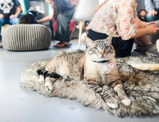 Cat Therapy - Cat Cafe