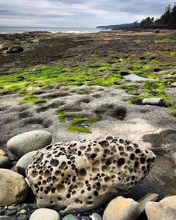 Port Renfrew, Canada: Botanical beach