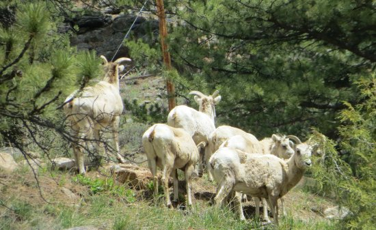 Swiftcurrent Lodge on the River: Wildlife in Rocky Mountain National Park