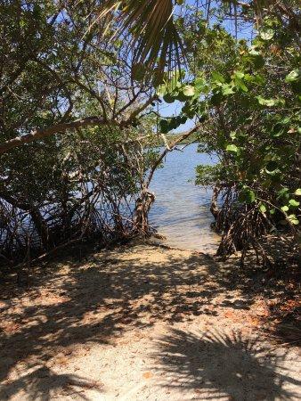 John D. MacArthur Beach State Park : photo8.jpg