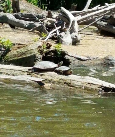 River Bend Nature Center: 20170529_151632_large.jpg