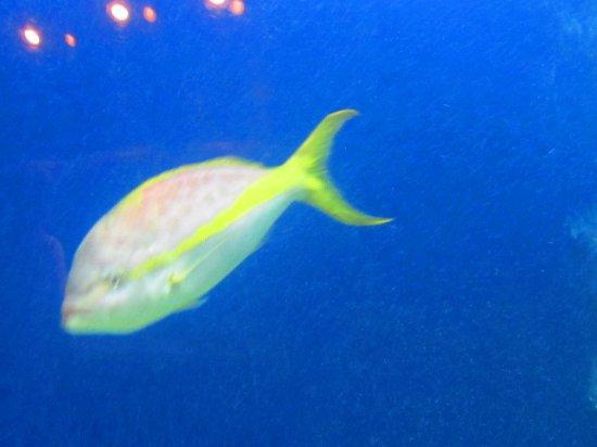 At the aquarium picture of riverbanks zoo and botanical for Aquarium botanic