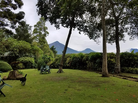 Kisoro, Oeganda: View of Virunga range from the garden, with the friendly resident dog Sushi running around.