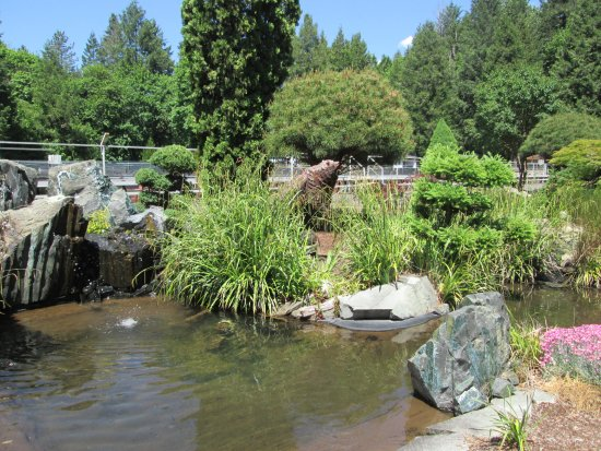 Oakridge, OR: Wild bear lurking by a pond