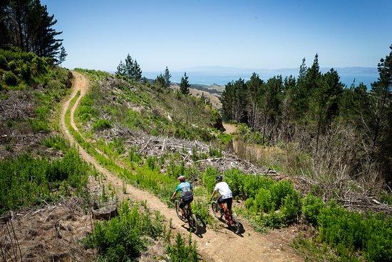 Fourforty Mountain Bike Park