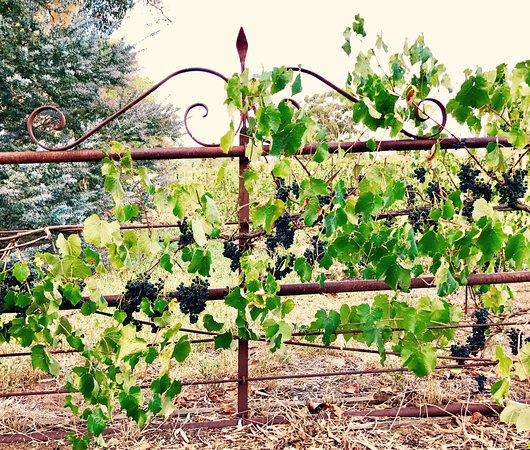 Κοιλάδα Barossa, Αυστραλία: Gibson Wines Cellar Door Entrance