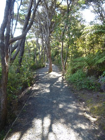 Cooks Beach, Neuseeland: On the way back, there is a track beside the road which is wonderful - native bush, and birds