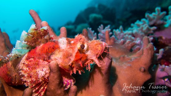 Rawai, Thailand: Scorpion Fish at Racha Noi
