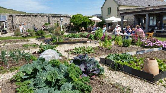 Sandleigh Tea Room & Garden: el huerto