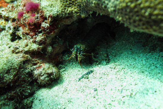Nusa Lembongan, Indonesia: Spotted