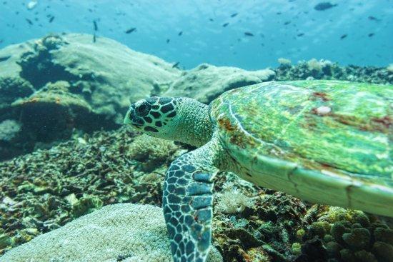 Nusa Lembongan, Indonesia: Swimming together