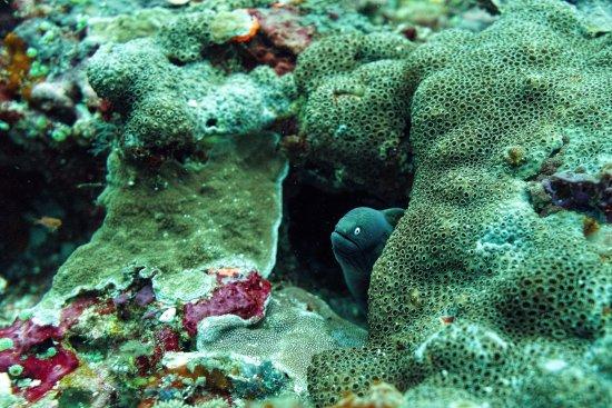 Nusa Lembongan, Indonesia: Moray eel