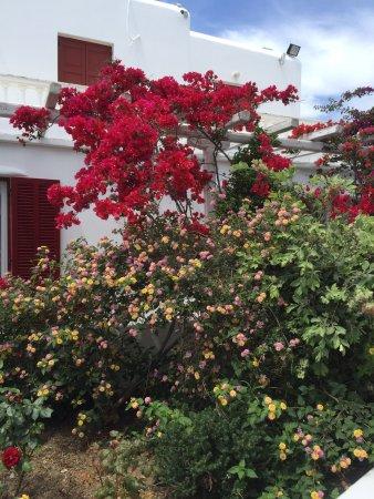 Domna Petinaros Apts Hotel Mykonos: photo3.jpg