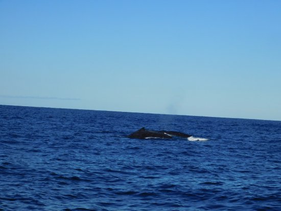 Huskisson, Australia: We were so close to these beautiful whales.