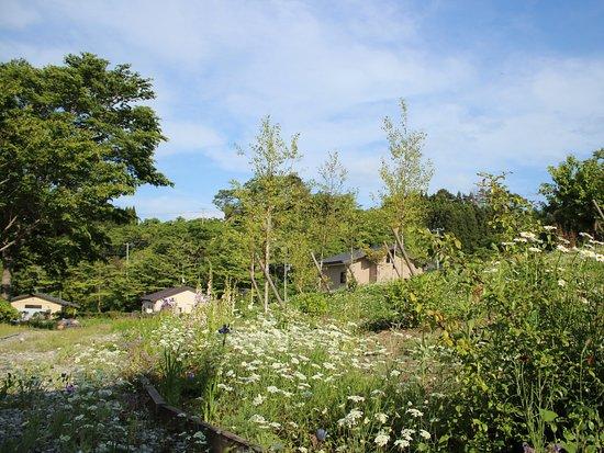 Rikuzentakata, Japan: 春のホテルの庭先は隠れた花畑になります。
