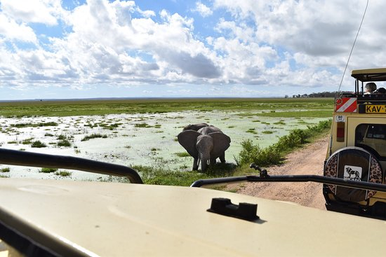Amboseli National Park, Kenia: photo3.jpg