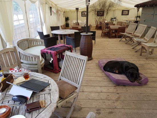 Guiting Power, UK: Very dog friendly. This is a marquee at the rear of the pub, allowing us to work and have the do