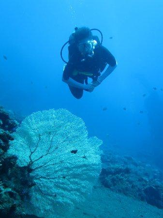 Liberty Dive Resort: Coral garden, Tulamben