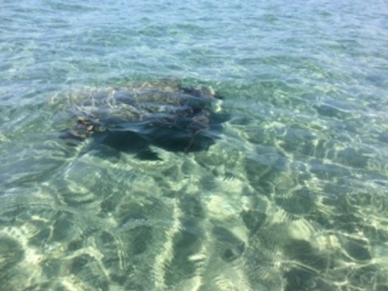 Zakynthos Turtle Rescue Center (Vasilikos, Greece): Top ...