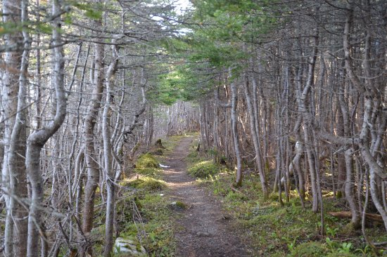Rocky Harbour, Canadá: Lovely walk among the trees.