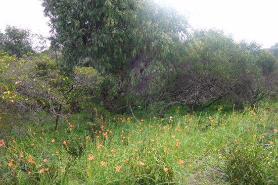 Cape Naturaliste, Australia: Flora and fauna
