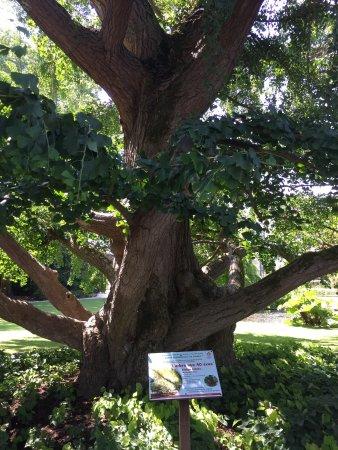Jardin Botanique de Tours : photo2.jpg