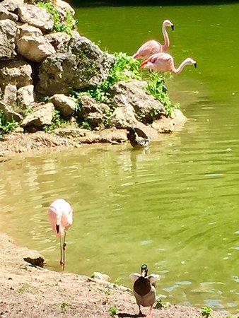 Jardin Botanique de Tours : photo3.jpg