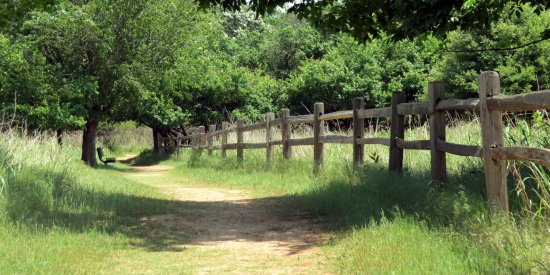 Martin Park Nature Center: Walking path and bench