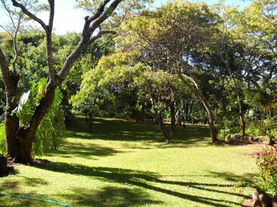 Gweru, Zimbabwe: View from the large Veranda watching the bird life