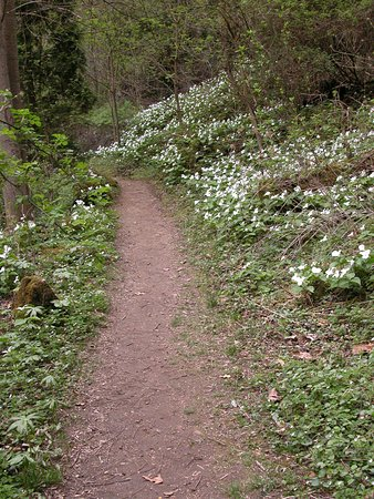 Bainbridge  Ross County, OH : Two public trails lead you down into the Rocky Fork Gorge with spectacular wildflower displays!!