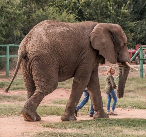 Hartbeespoort, South Africa: Walk