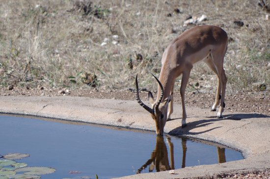 Casart Game Lodge: View of the watering hole near the game lodge