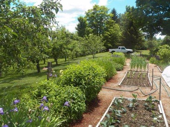 Chocorua, NH: Our gardens