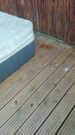 Bird S**t all around patio and hot tub