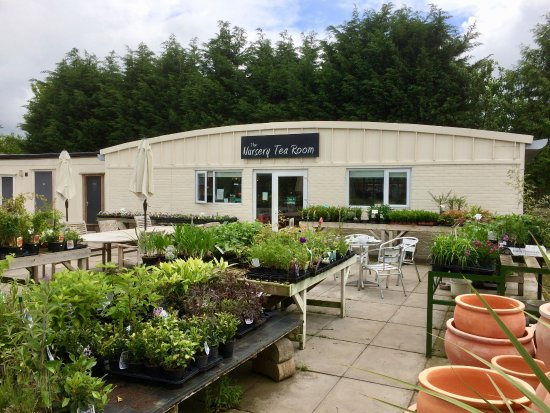 Collingham, UK: Nursery Tea Room