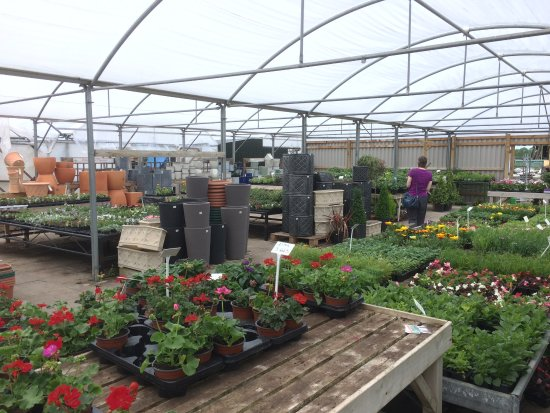 Collingham, UK: Garden Centre