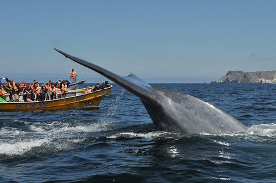 Whale Watching Chile