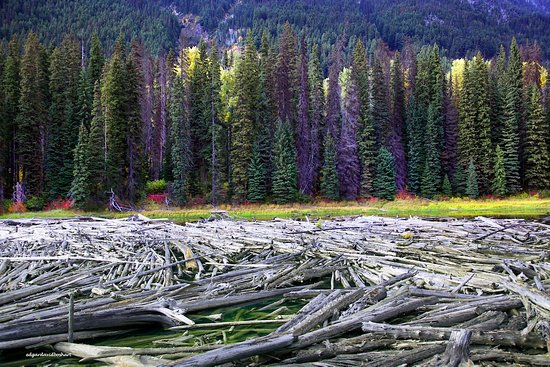 Lillooet, Canadá: Forest debris is very spectacular (especially at Duffey Lake)