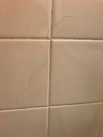 Holiday Inn Southaven - Central: Hair on shower wall, about chest level
