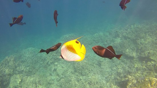 Sea Quest Snorkel Tours: GoPros are available to rent, we brought our own.