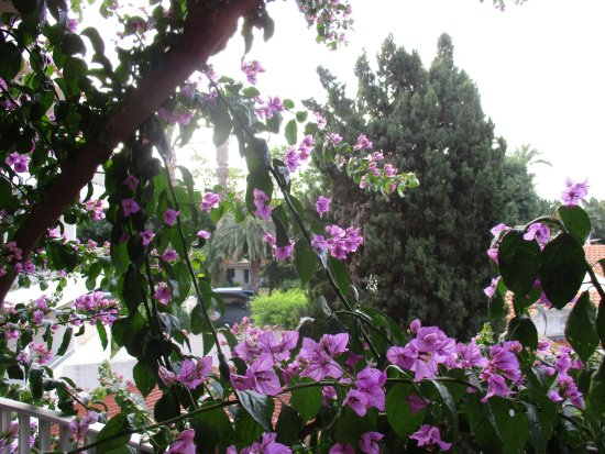 Alenya, Frankrig: la floraison