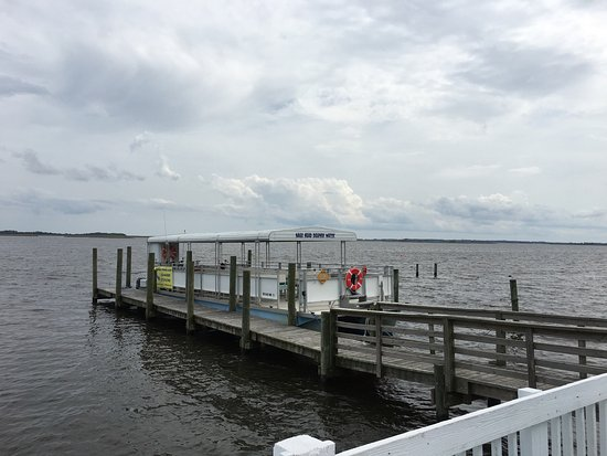 Dolphin Watching Tours Outer Banks Nc