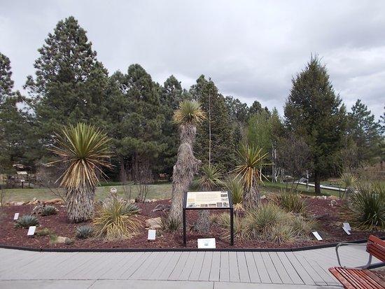 Smokey Bear Historical Park, Capitan NM. BEAUTIFUL PARK.