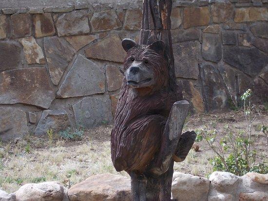 Smokey Bear Historical Park, Capitan NM. Terrified tiny bear cub.