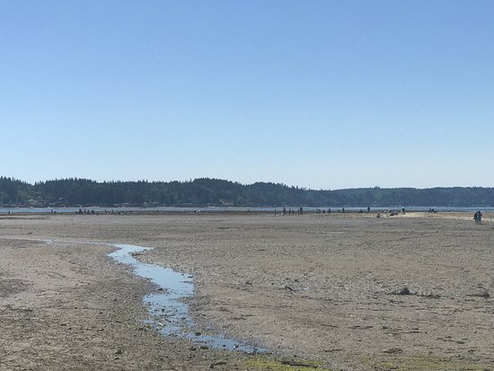 Belfair, WA: Nice park with great facilities. BBQ grills, bathrooms, changing rooms, etc. Beach has oysters a