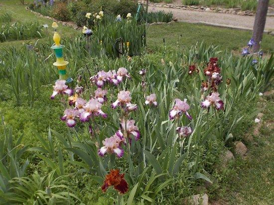 Hondo, New Mexico, Iris Farm and Gallery.