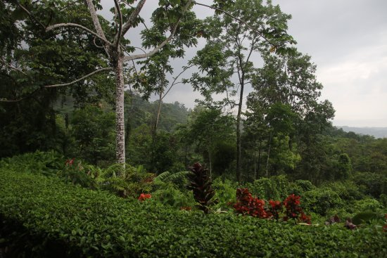 Oxygen Jungle Villas: View from room