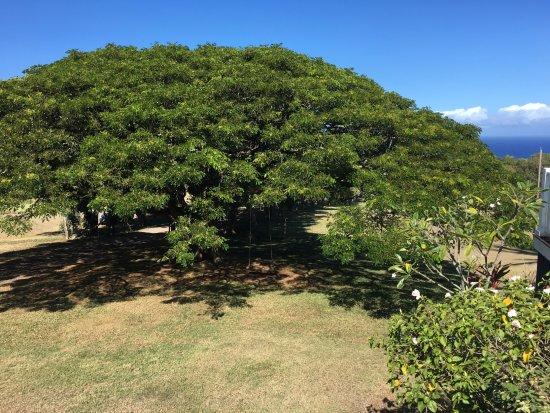 Hawi Photo