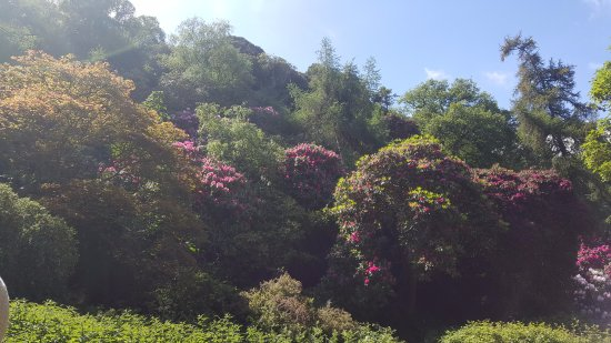 Howth castle garden